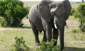 Travel Tips For An African Safari