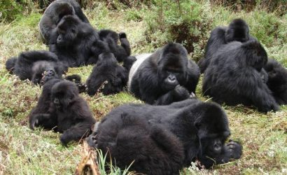 3 Day Gorilla Tracking Safari