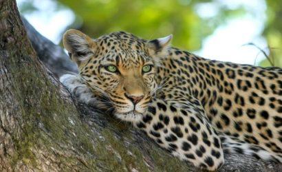 7 Day Serengeti Ngorongoro Manyara Safari