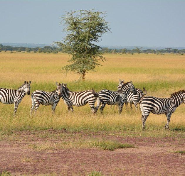 3 Days Serengeti Ngorongoro Safari