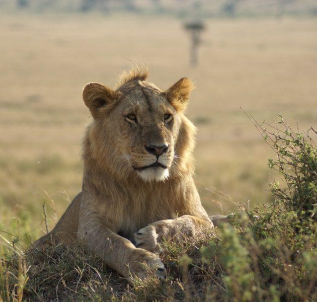 Ngorongoro Serengeti 4 Days Safari