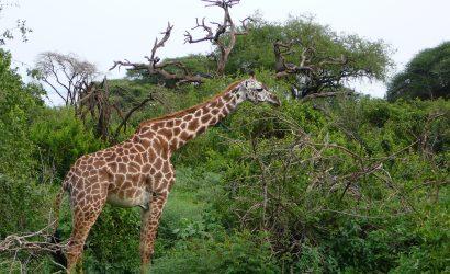 5 Day Manyara Serengeti Ngorongoro
